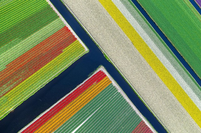 Финалист в категории «Аэрофотография», 2020. «Цветочная текстура». Автор Франко Каппеллари