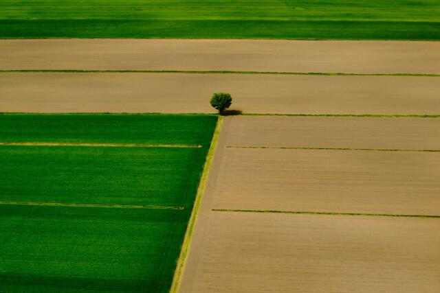 Финалист в категории «Аэрофотосъёмка», 2021. «Зелёная геометрия». Равнины Северной Италии. Автор Маттео Бузетто