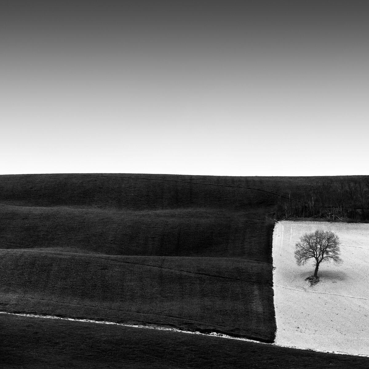1 место в категории «Пейзаж», 2021. «Дерево в квадрате». Автор Розарио Чивелло