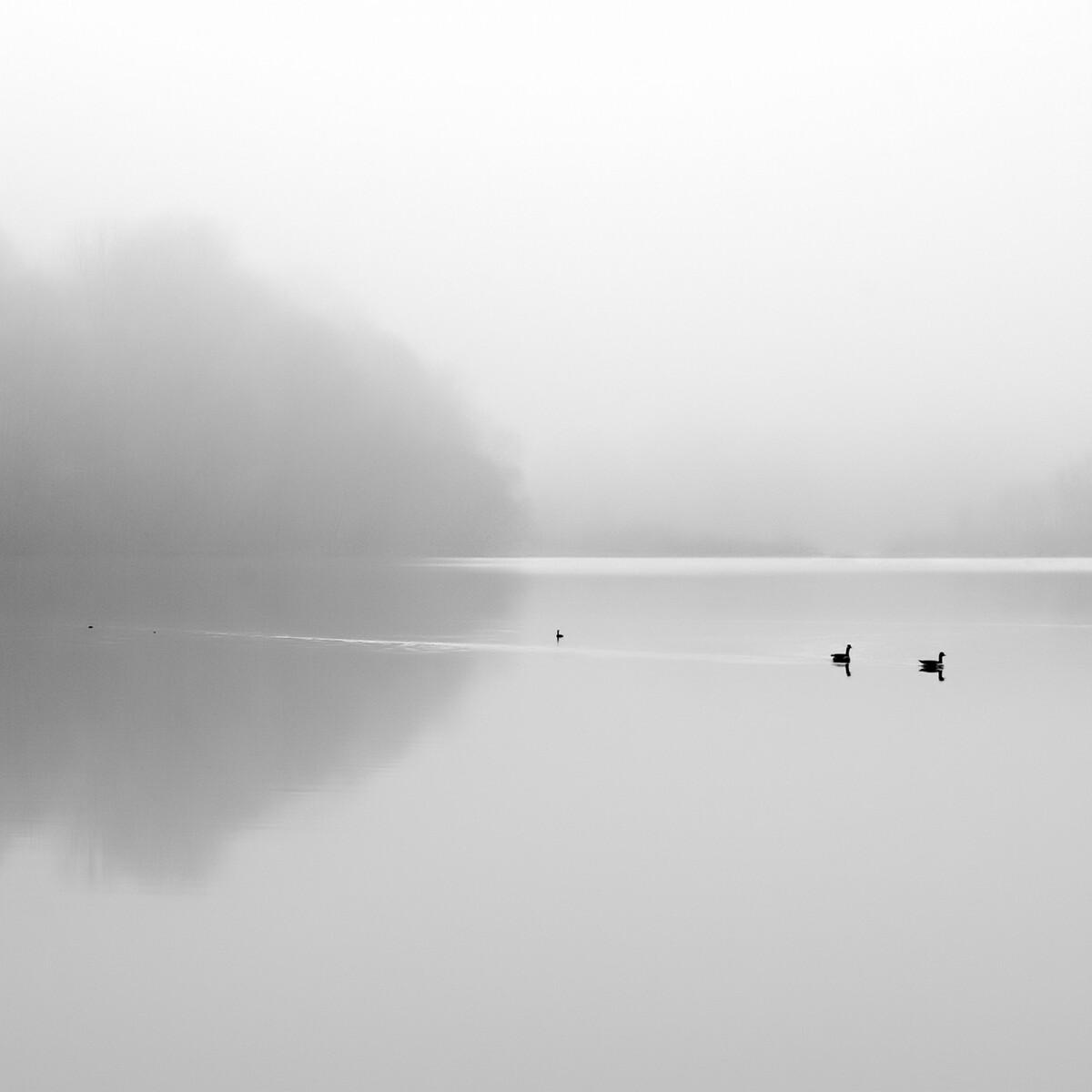 Финалист в категории «Пейзаж», 2021. «Тишь». Утренний туман в местном парке. Автор Андрей Илачинский