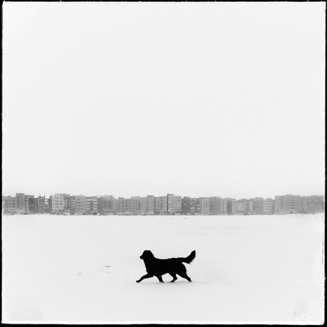 Финалист в «Открытой» категории, 2019. Собака на прогулке. Автор Шахруз Карбалаи Мохаммад