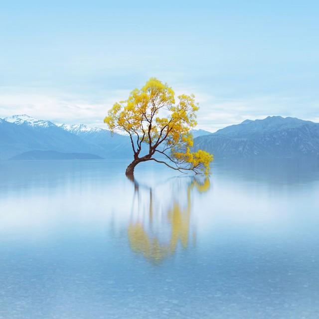 Финалист в категории «Длинные выдержки», 2019. «Одинокое, счастливое, танцующее дерево». Автор Чонг Дайан