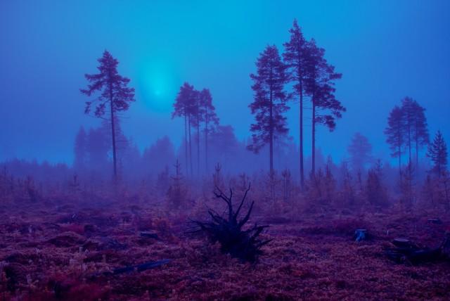 Из фотопроекта «Какой-то небесный огонь». Автор Мария Лакс (13)