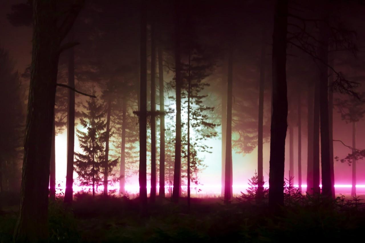 «Лес ночью». Из фотопроекта «Какой-то небесный огонь». Автор Мария Лакс