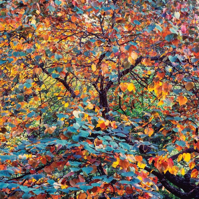 «Осеннее зрелище». Автор Кристофер Бёркетт