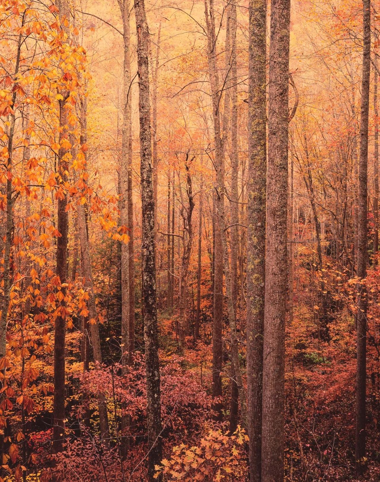 Аппалачский лес. Автор Кристофер Бёркетт