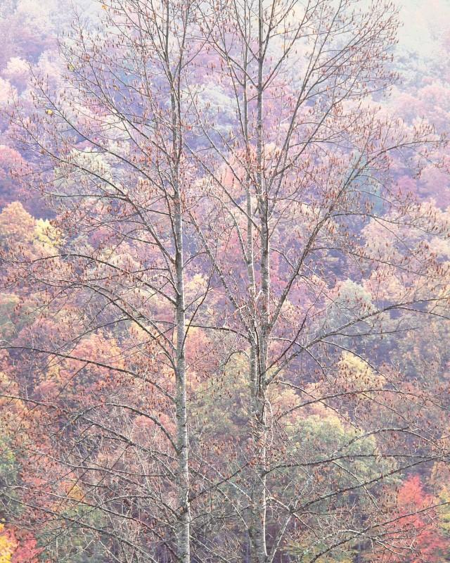 Лес в Западной Вирджинии. Автор Кристофер Бёркетт