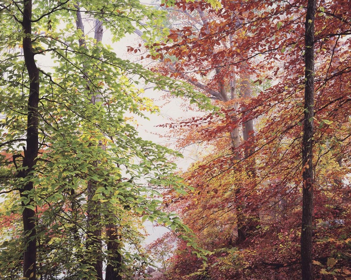 Мирный осенний лес, Огайо. Автор Кристофер Бёркетт