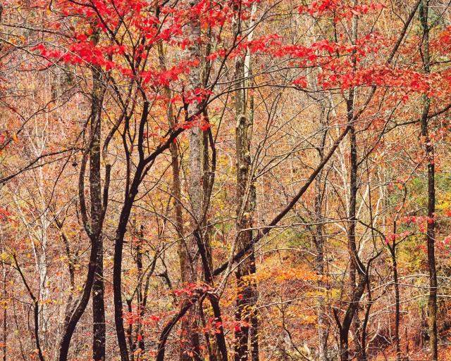 Осенний лес, Теннесси. Автор Кристофер Бёркетт
