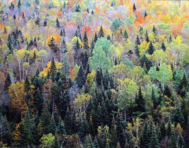 Пёстрый лес, Нью-Гэмпшир. Автор Кристофер Бёркетт