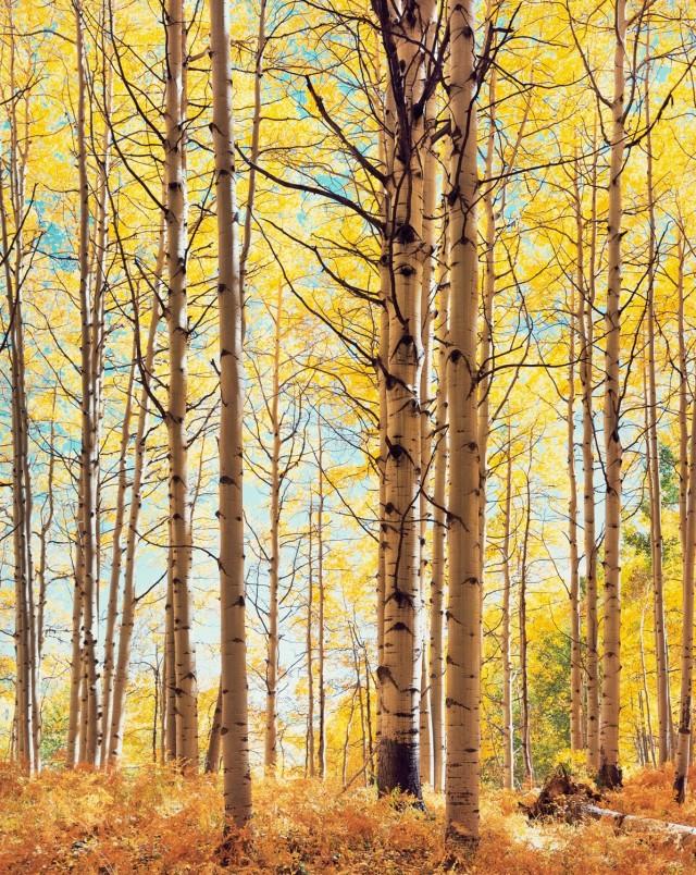Полупрозрачный лес. Автор Кристофер Бёркетт