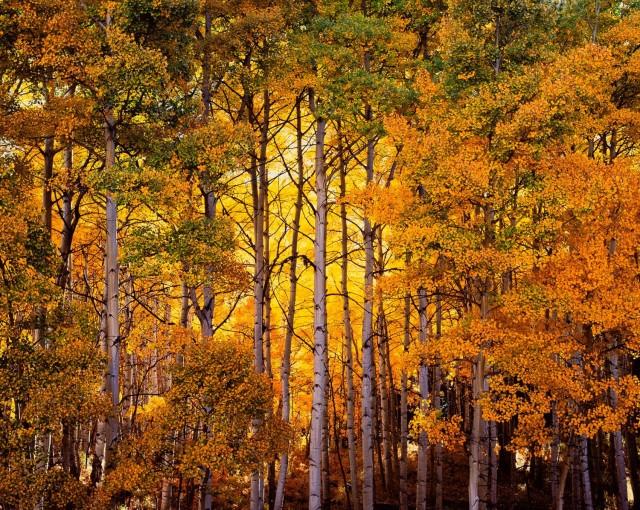 Сияющий лес, Колорадо. Автор Кристофер Бёркетт