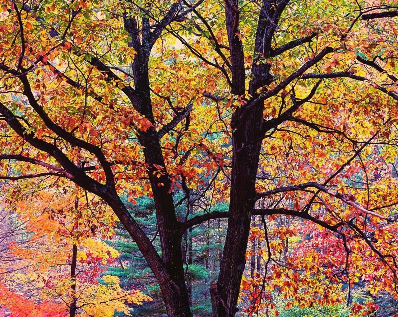 Яркий дуб, Орегон. Автор Кристофер Бёркетт