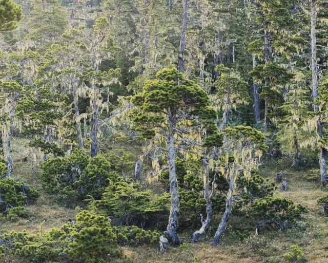 Лес Ривенделл, Аляска. Автор Кристофер Бёркетт