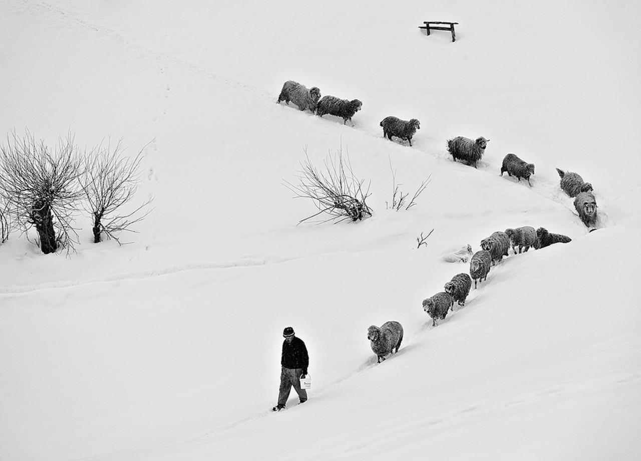 Поощрительная премия в категории «Люди» среди профессионалов, 2020. «Пастух в горной румынской деревне. Автор Михай Мойчану