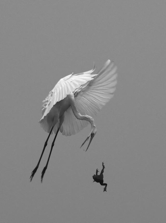 Поощрительная премия в категории «Дикие животные» среди любителей, 2020. «Большой побег». Автор Аруп Бхаттачарджи