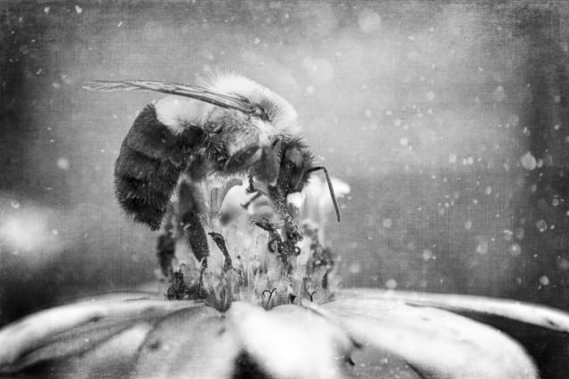 2 место «Фотограф года» среди профессионалов 2019. «Пчелиный обед». Автор Сэнди Адамс