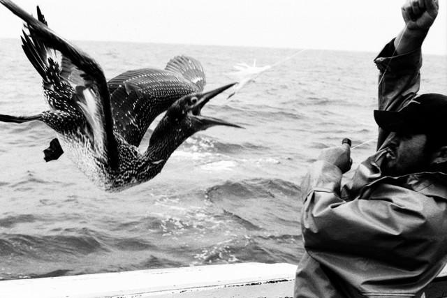 Поощрительная премия в категории «Спорт» среди профессионалов 2019. «Рыболовы». Автор Тксомин Тсуека