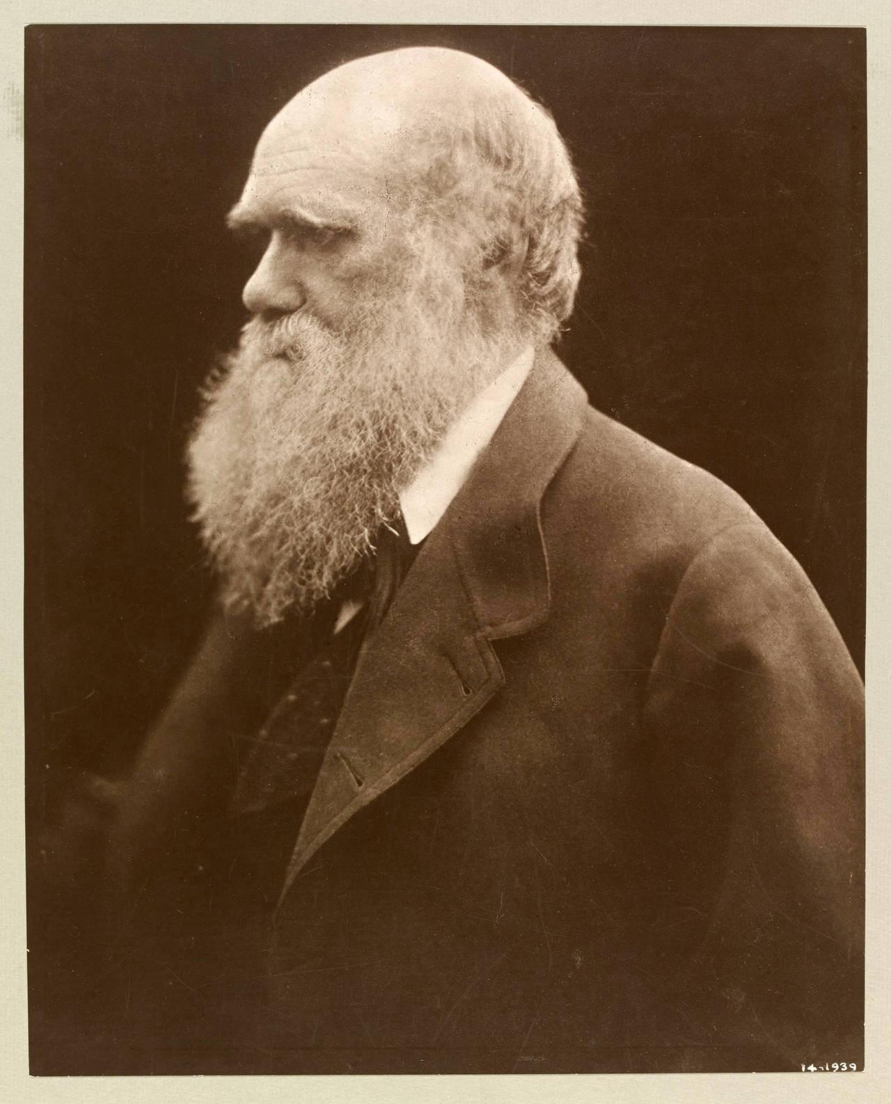 Чарлз Дарвин, 1868. Автор Джулия Маргарет Камерон