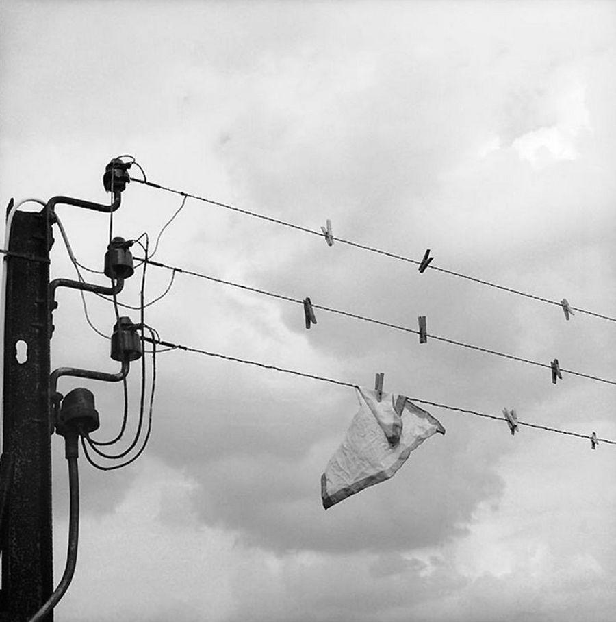 Провода. Автор Рене Мальтет