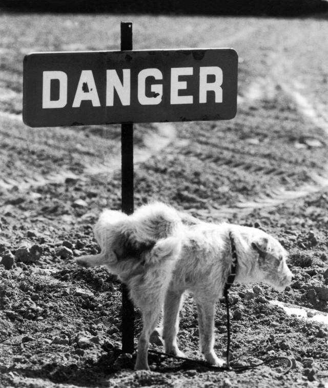 Реакция на «Опасно». Автор Рене Мальтет