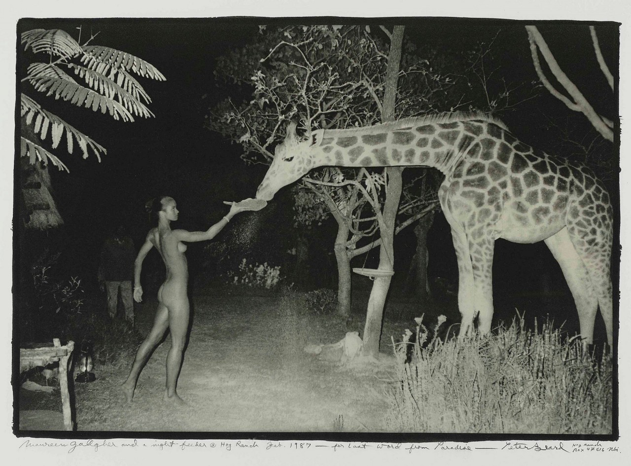 Ночное кормление жирафа, Ранчо Хог, 1987. Модель Морин Галлахер, фотограф Питер Бирд