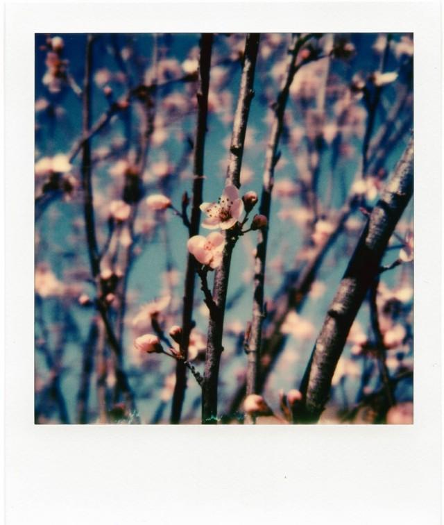 Весна, Луисвилл, Кентукки. Фотограф Джесси Уиздом