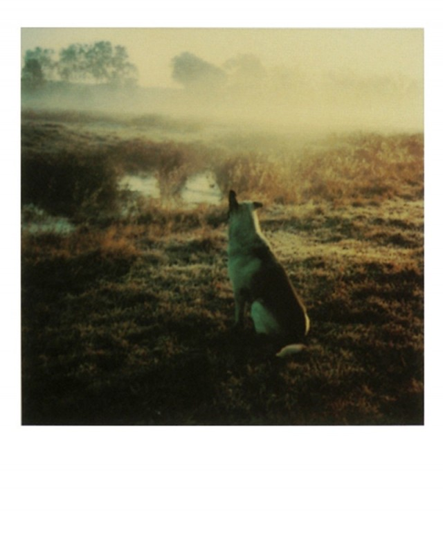 Пёс и туман. Фотограф Андрей Тарковский