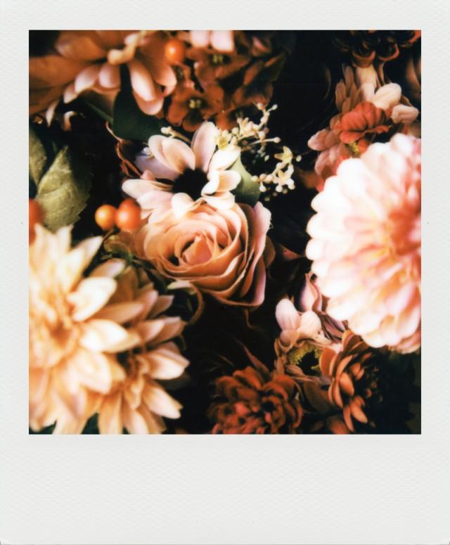 «Цветы». Фотограф StoleYourRubberToes