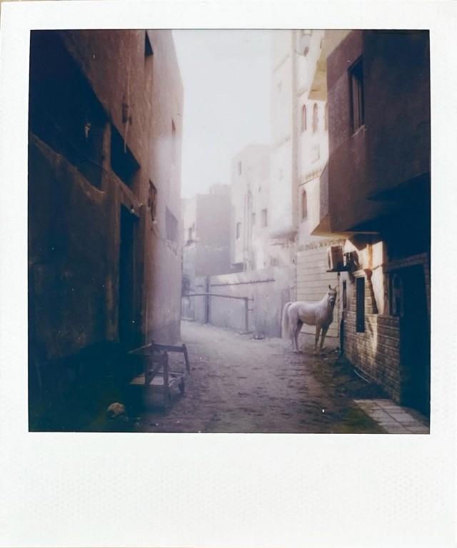 Белая лошадь. Гиза, Египет, 2021. Фотограф mr.b_innocent