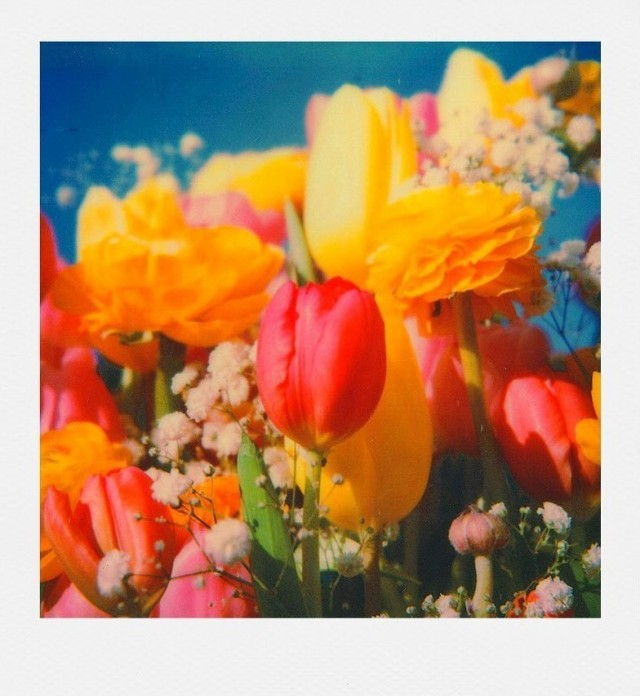 Цветы. Фотограф joeppolaroidphotography