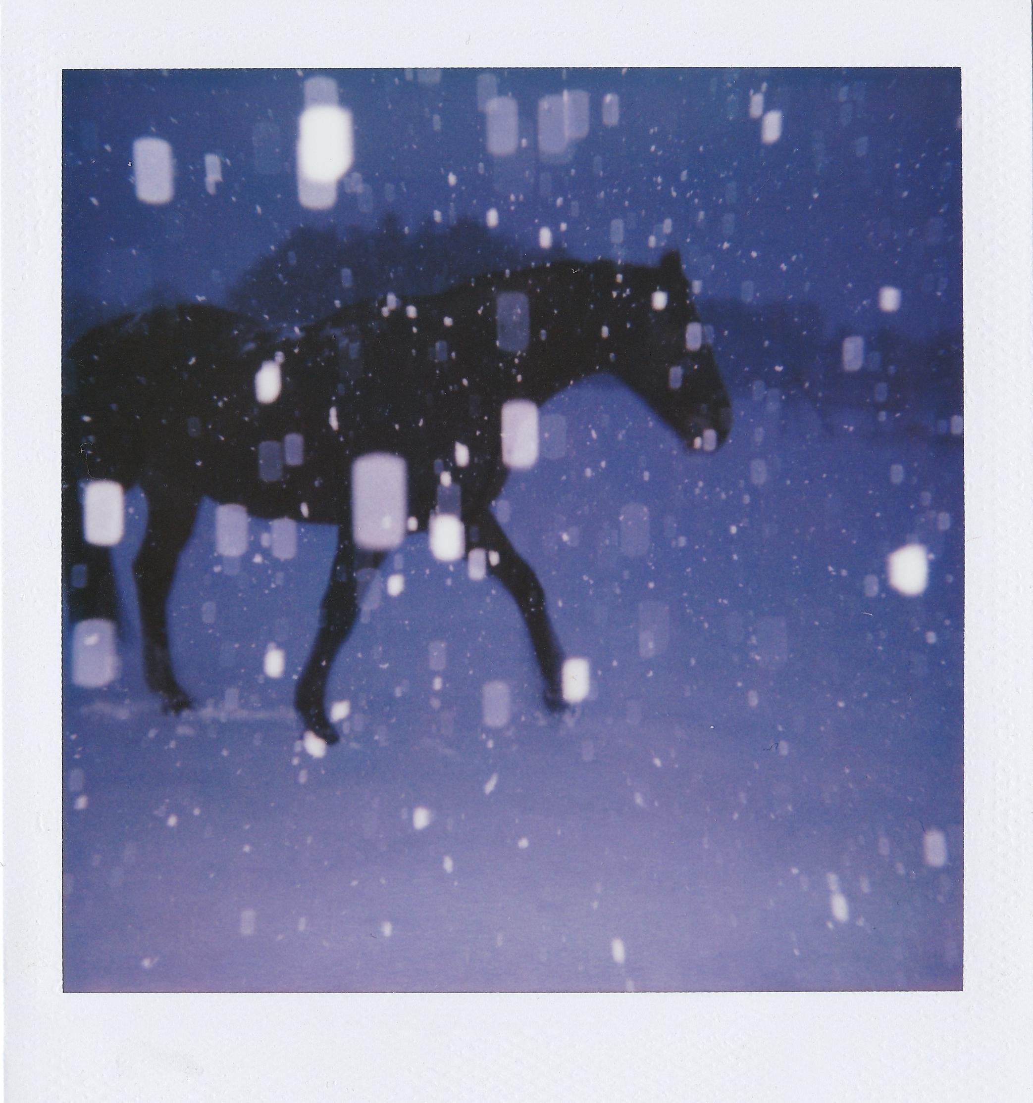 Лошадь в снегу. Фотограф joakimsteyls