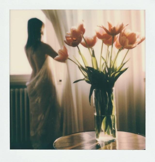 Тюльпаны. Фотограф Паоло Ферруззи