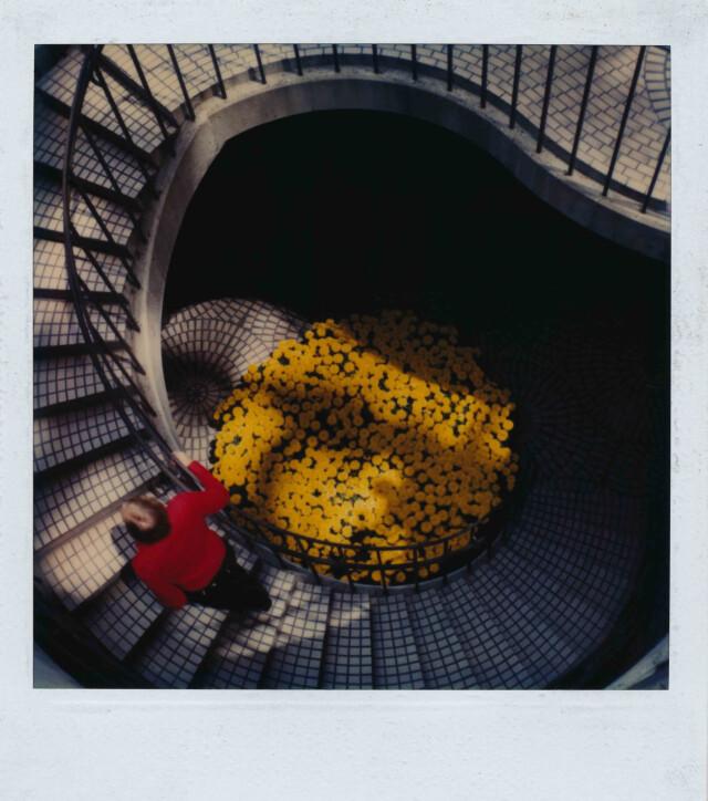 Жёлтая клумба. Фотограф Роберт Фарбер
