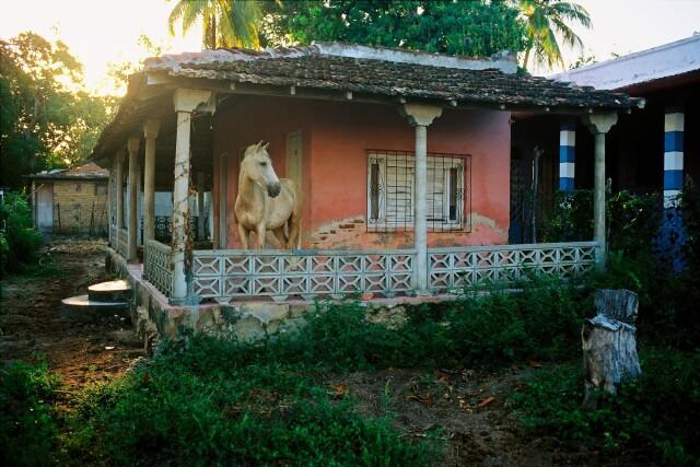 Рабочая лошадь на крыльце дома, Куба, 1998. Фотограф Дэвид Алан Харви