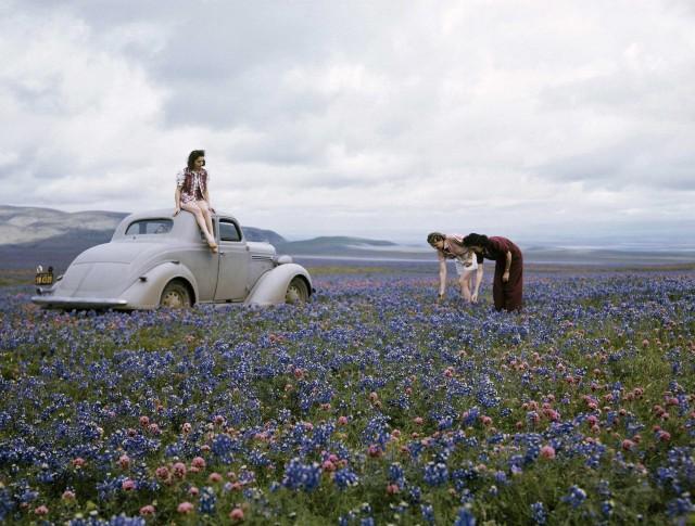 Цветы в поле вдоль Маршрута 99, калифорнийская долина Сан-Хоакин, 1940-е. Фотограф Б. Энтони Стюарт