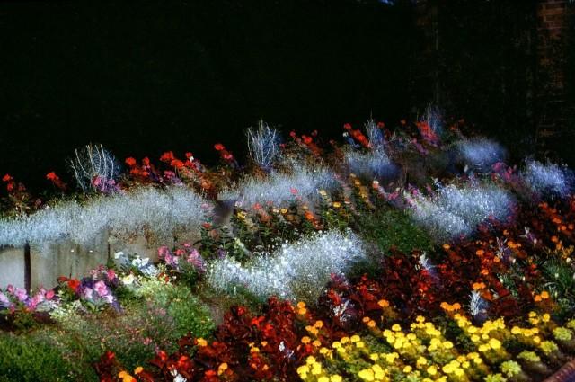Цветочный сад Броквелл-парка, Лондон, Англия, 1989. Фотограф Крис Стил-Перкинс