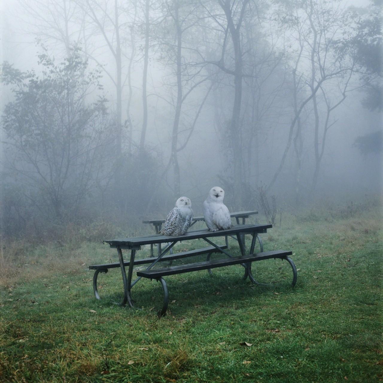 Из серии «Пока не придет Царство», 2005. Фотограф Симен Йохан