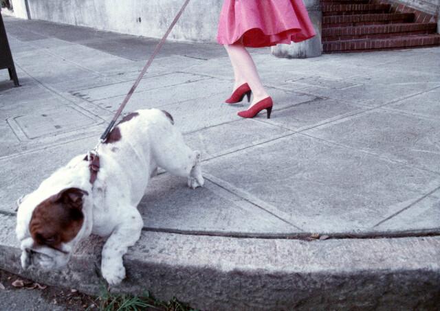 Бульдог и красные туфли, 1989. Фотограф Роберт Фарбер