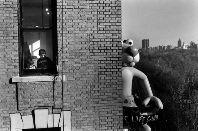 Розовая пантера, Нью-Йорк, 1988. Фотограф Эллиотт Эрвитт