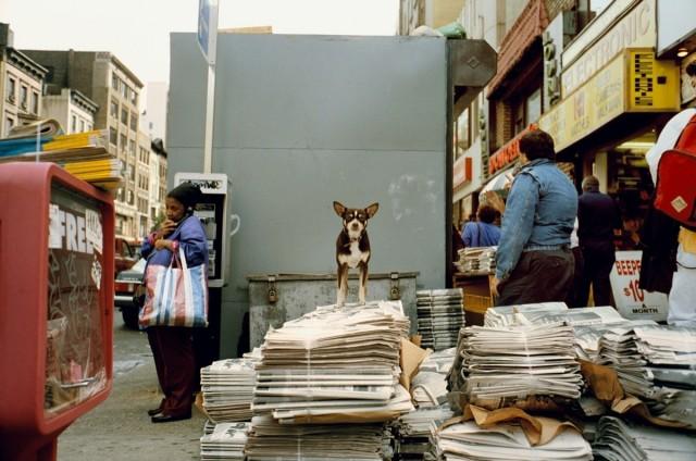 Нью-Йорк, 1993. Фотограф Джефф Мермельштейн