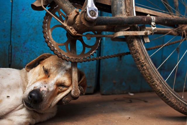 Спящая собака, Варанаси, Индия, 2011. Фотограф Мацей Дакович