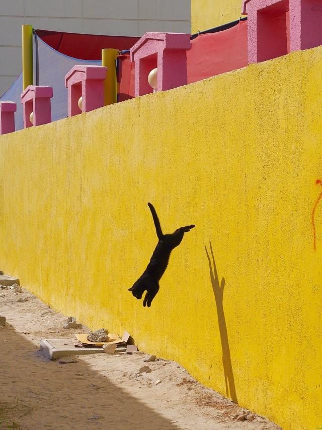 Чёрный кот. Фотограф mabota11