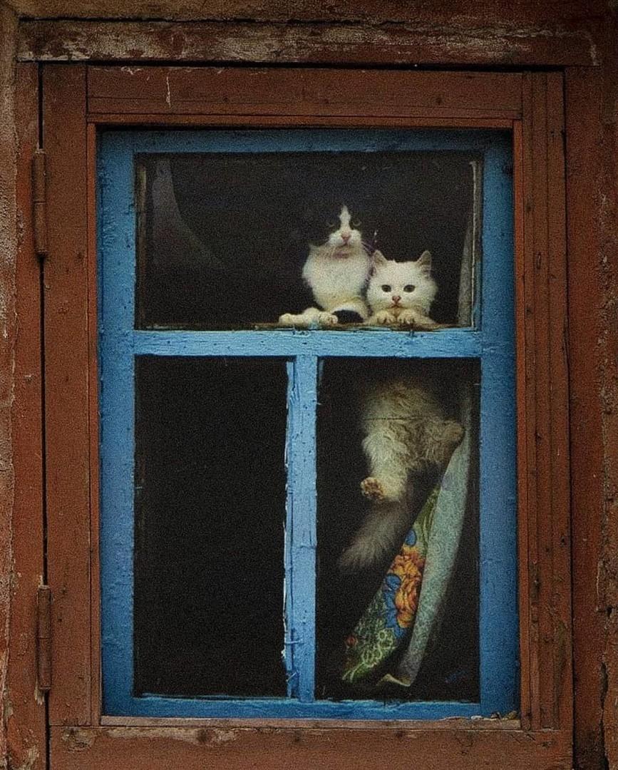 «Два друга». Фотограф Станислав Герасько