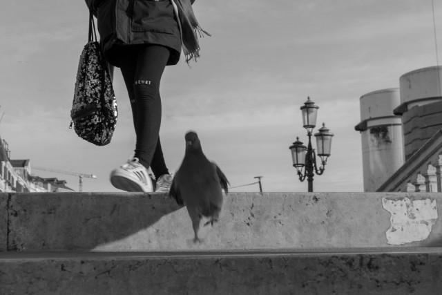 Шагающий голубь. Фотограф Джорджио Де Зан