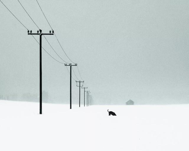 Любопытство. Фотограф Алексей Шульц
