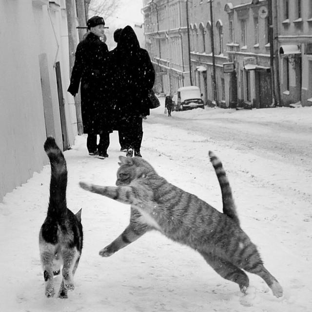 Коты и люди. Фотограф Юха Метсо