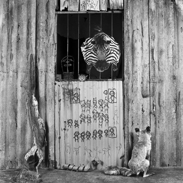 «Комната зебры», 2007. Фотограф Роджер Баллен