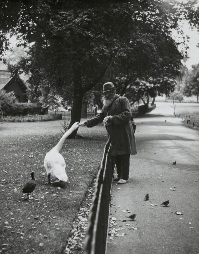 Кормление птиц. Сент-Джеймсский парк, Лондон, 1950. Фотограф Изис Бидерманас