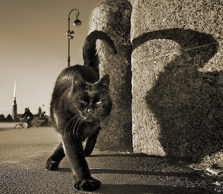 Чёрный кот. Фотограф Александр Петросян